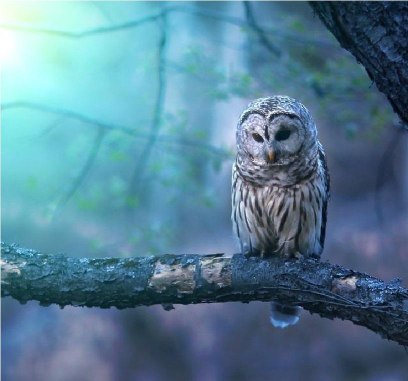 elegant owl photography 9