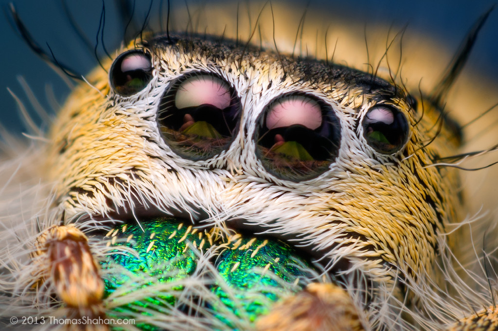 Amazinng Macro Photography Spider 1024x682 Unusual Macro Photography Ideas