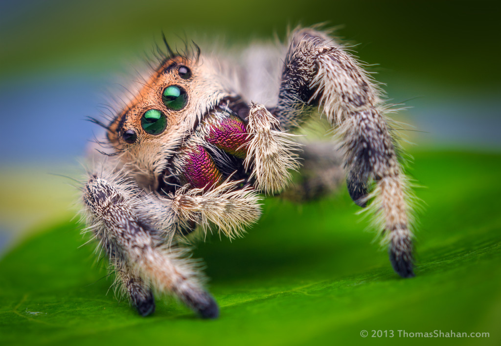 Awsome Macro Photography Spider 1024x708 Easy Macro Photography Tips And Tricks for Great Results