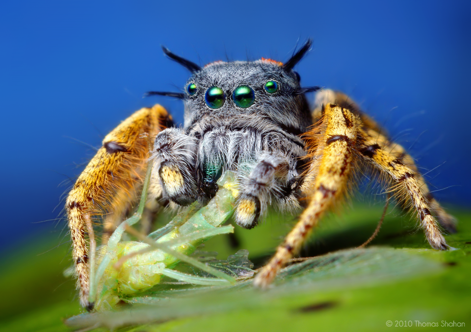 Best Macro Photography Spider The Best Capture Macro Photography of Insect