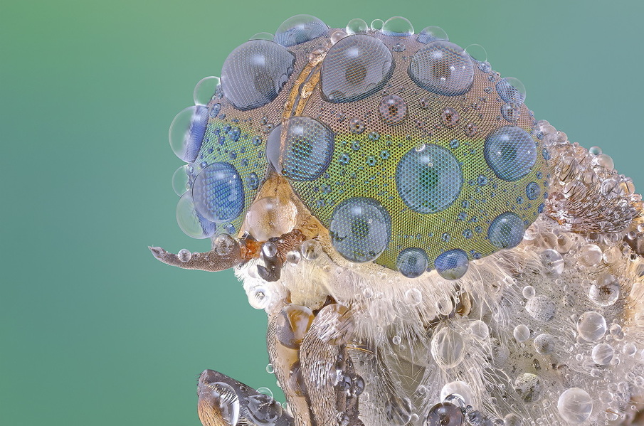 Best Macro photographs bugs Macro Photography of Insect Eyes