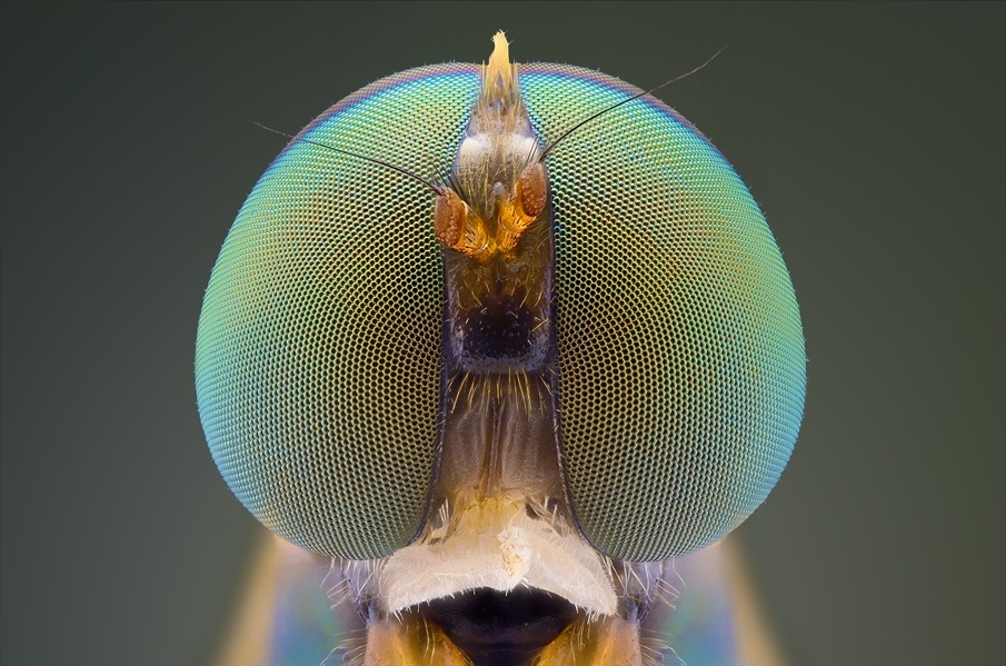 Incredible Macro photographs of insect eyes Macro Photography of Insect Eyes