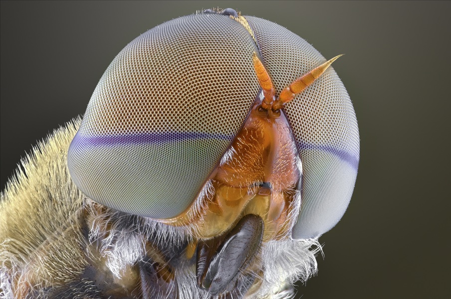 Macro Photography of Insect Eyes