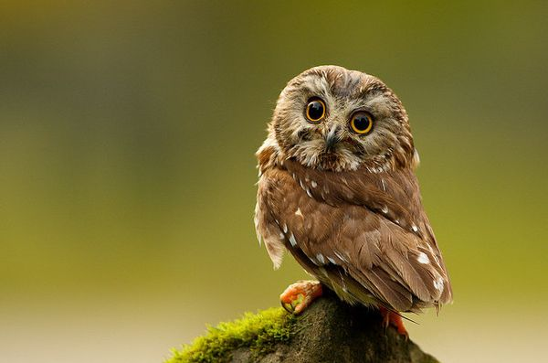 cute owl photography 2 23 Beauty Owl Photography