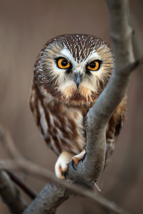 cute owl photography 5 23 Beauty Owl Photography