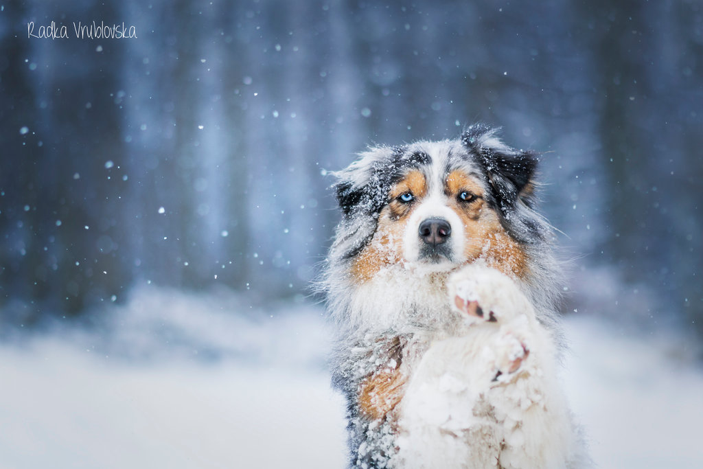 cute photography of the dog 2 Truly Amazing Photography of The Dog by Radka Vrublovka