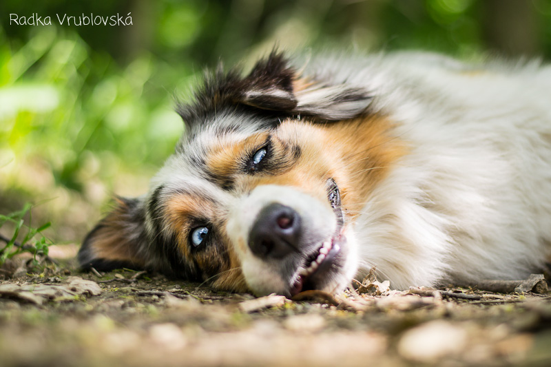 cute photography of the dog 3 Truly Amazing Photography of The Dog by Radka Vrublovka