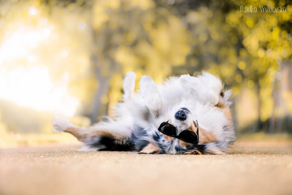 cute photography of the dog 6 Truly Amazing Photography of The Dog by Radka Vrublovka