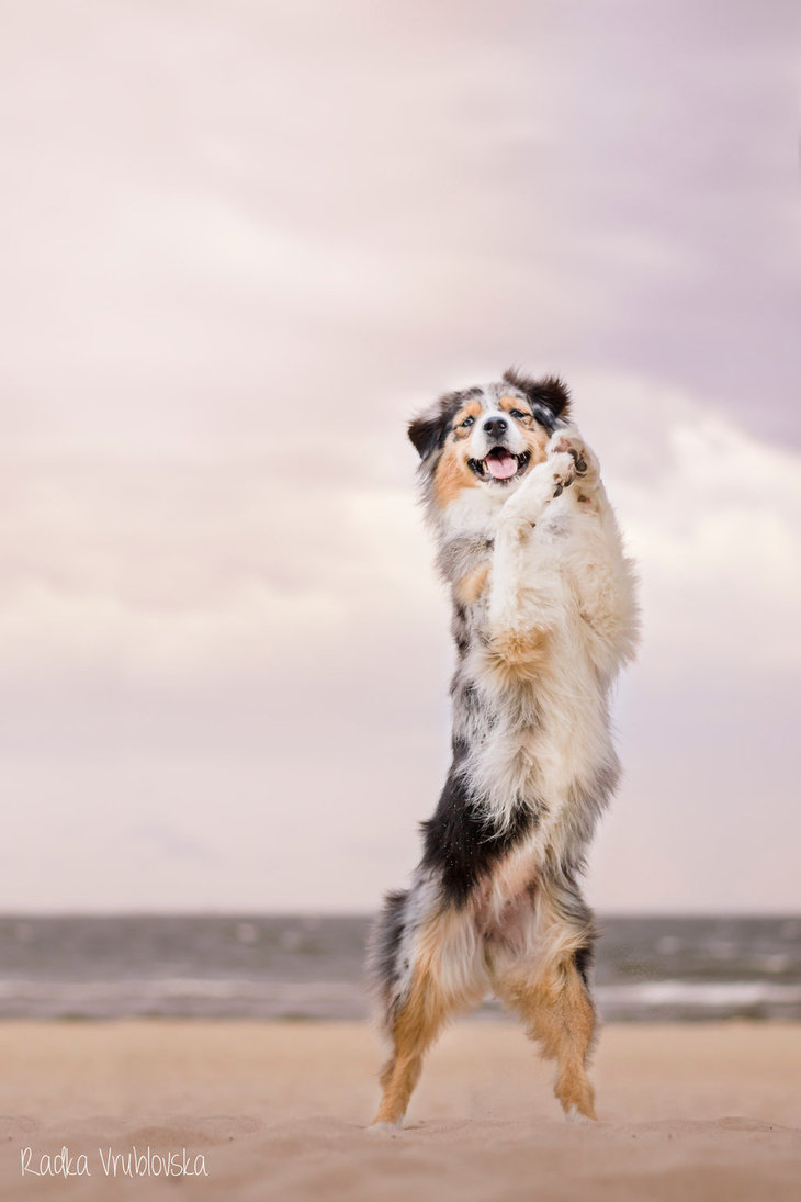 cute photography of the dog 7 Truly Amazing Photography of The Dog by Radka Vrublovka