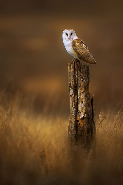 elegant owl photography 3 23 Beauty Owl Photography