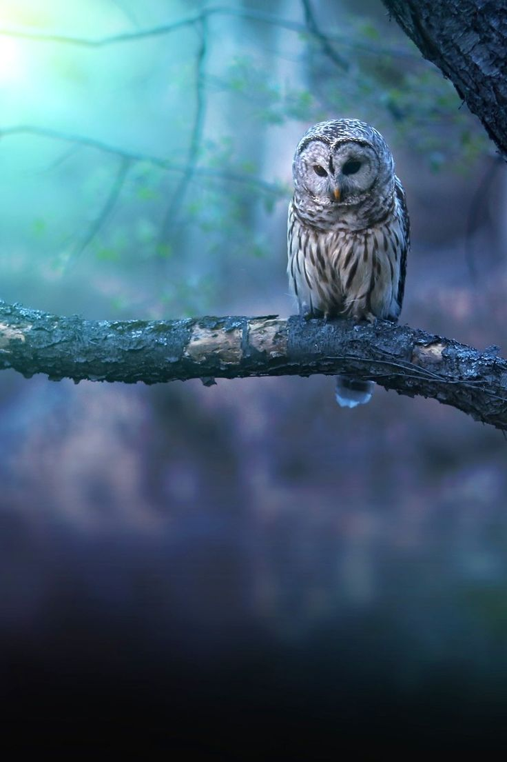 elegant owl photography 23 Beauty Owl Photography