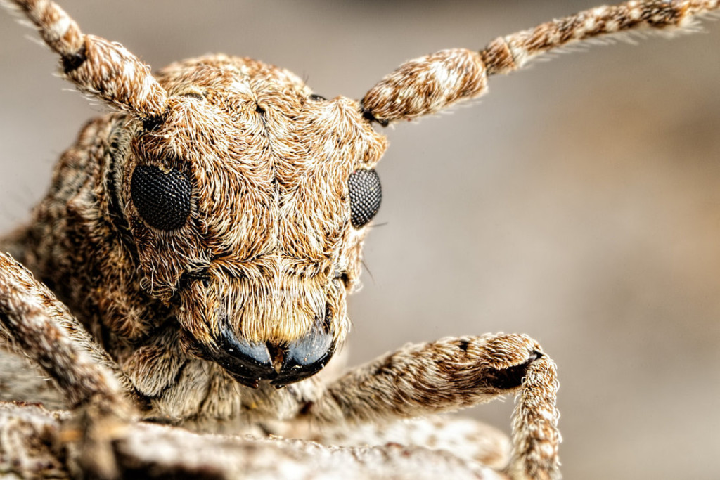 incredible close up macro photography of insect 2 1024x683 Unusual Macro Photography Ideas