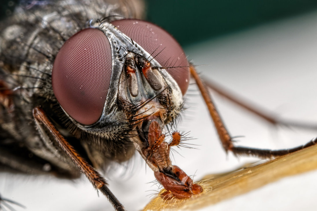 incredible close-up macro photography of insect 3