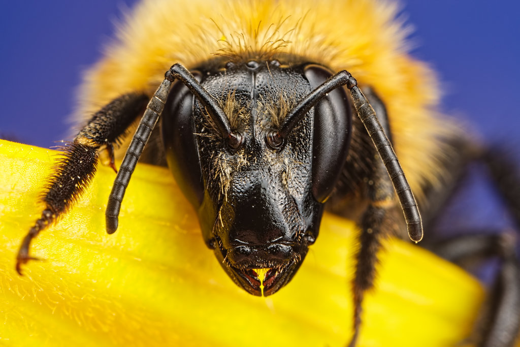 incredible close-up macro photography of insect 5