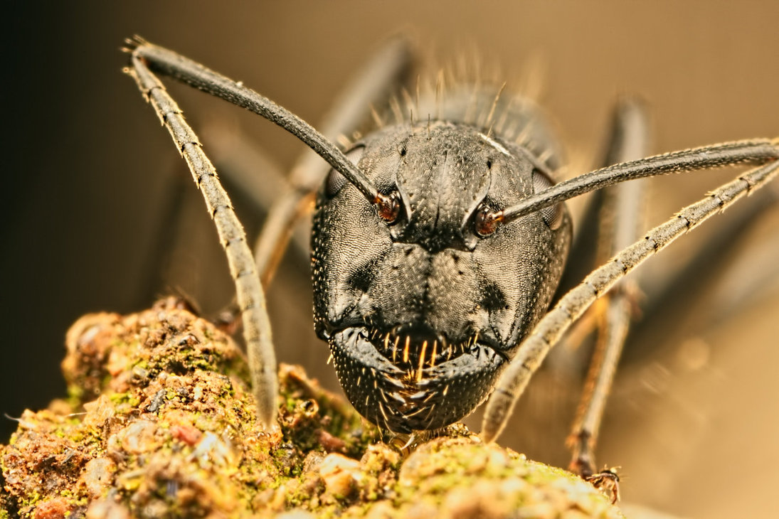 incredible close-up macro photography of insect 7