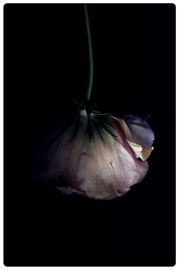 Light And Dark Beauty Photography 99inspiration
