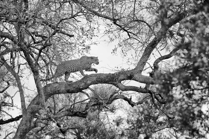 Amazing Black and White Animals Photography