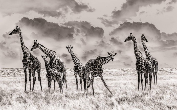 Beauty Black and White Animals Photography