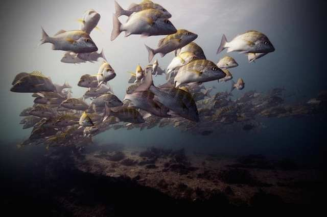 Brilliant Underwater Photography 5 Brilliant Underwater Photography by Jorge Cervera Hauser