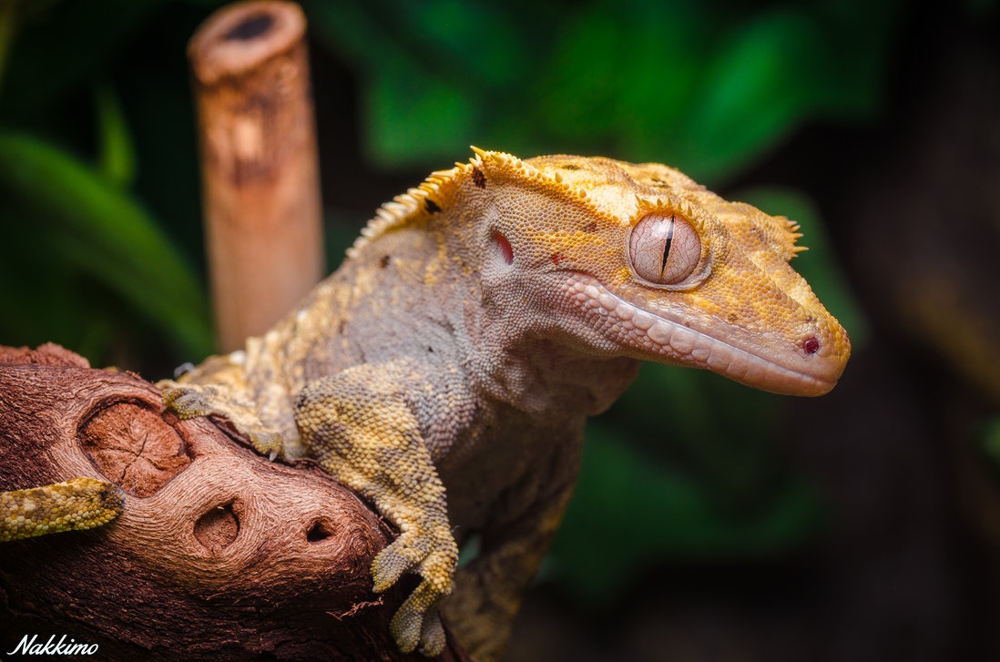 Cute Gecko Face photos 1