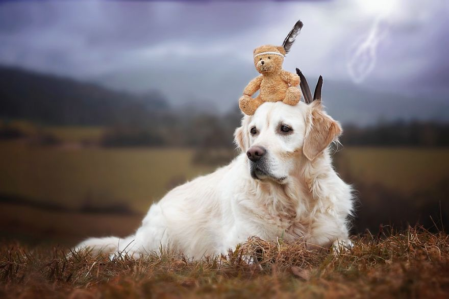 Unlikely Animal Friends 10 Unlikely Animal Friends With Teddy