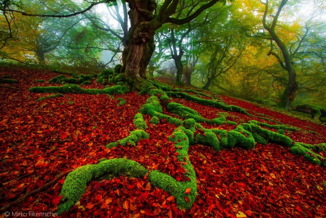 beauty Colorful Landscapes Photography 6