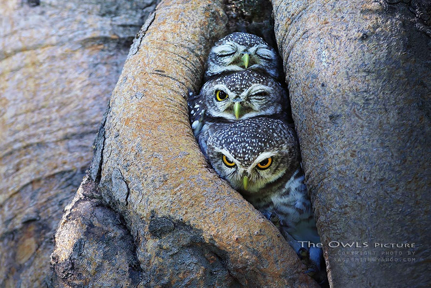 best owl photography captures 1 Best Owl Photography Captures  Ever