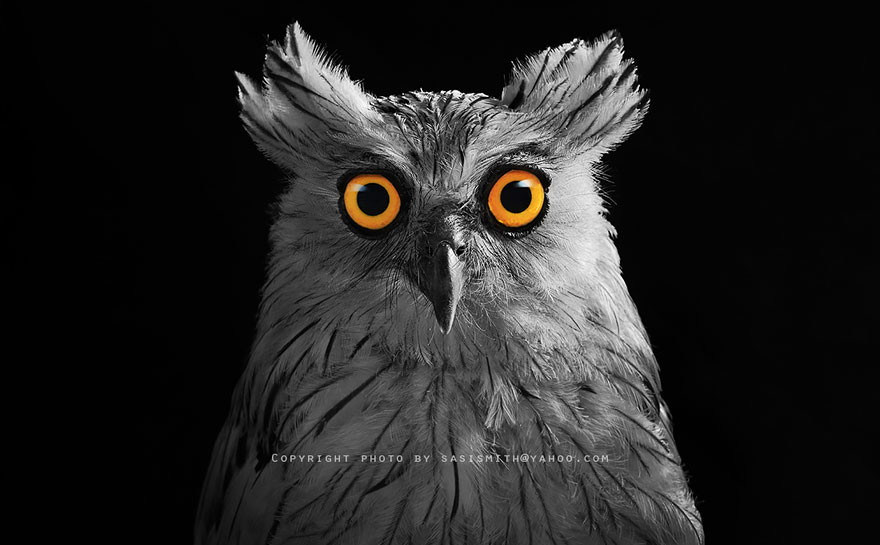 best owl photography captures 10 Best Owl Photography Captures  Ever