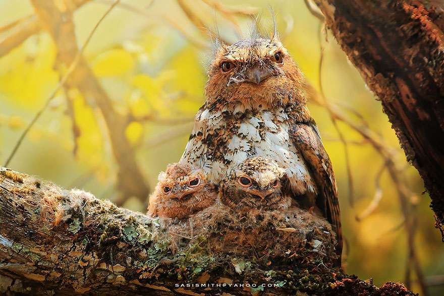 best owl photography captures 11 Best Owl Photography Captures  Ever