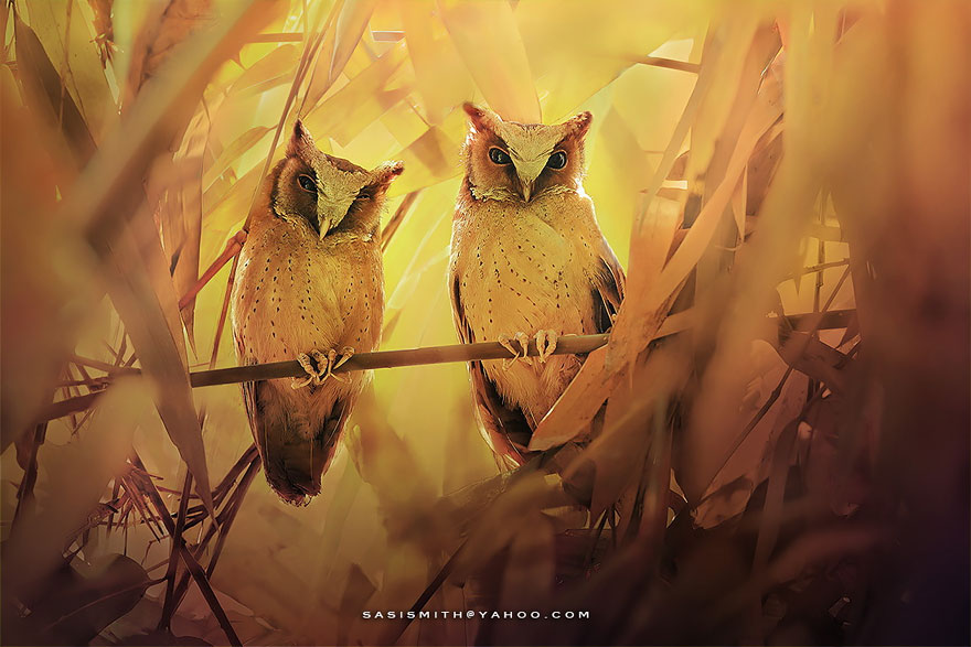 best owl photography captures 12 Best Owl Photography Captures  Ever