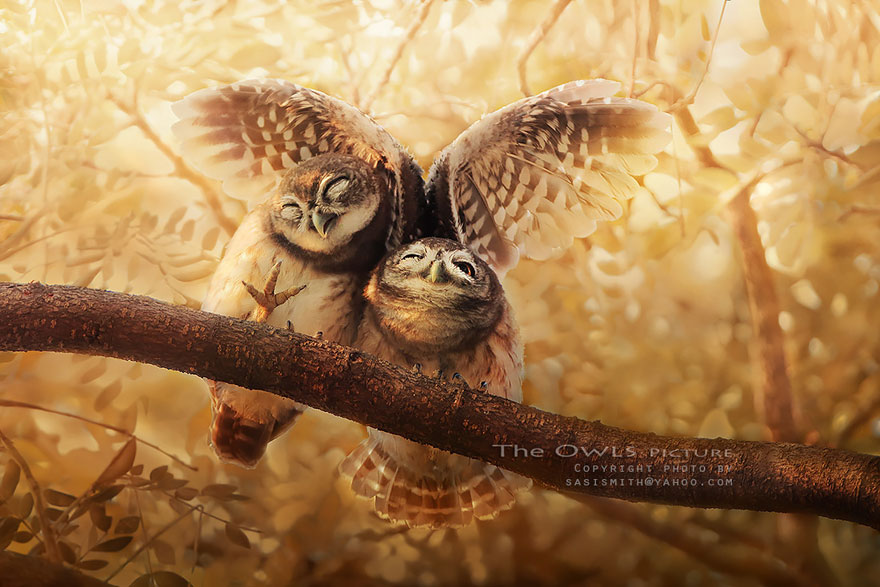 best owl photography captures 2 Best Owl Photography Captures  Ever