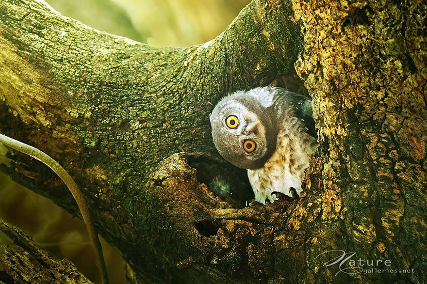 best owl photography captures 3 Best Owl Photography Captures  Ever