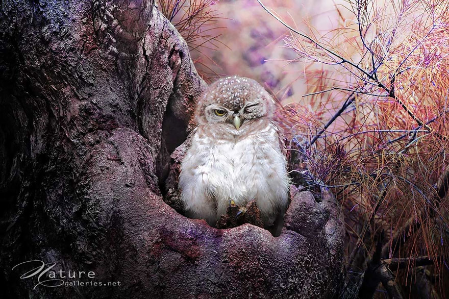 best owl photography captures 4 Best Owl Photography Captures  Ever