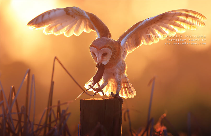 best owl photography captures 5 Best Owl Photography Captures  Ever