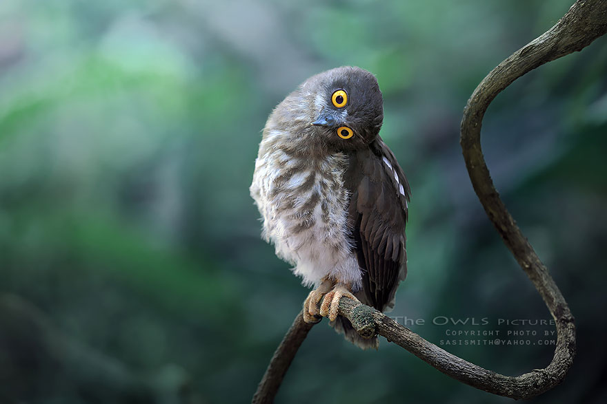best owl photography captures 6 Best Owl Photography Captures  Ever