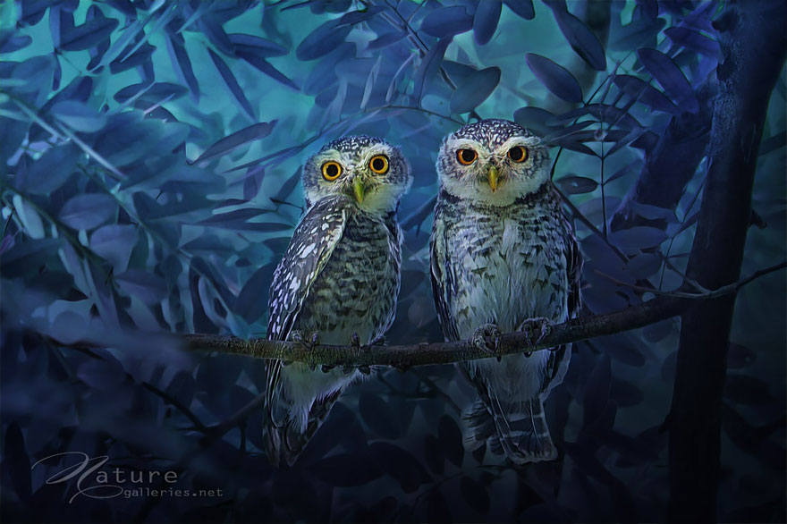 best owl photography captures 7 Best Owl Photography Captures  Ever
