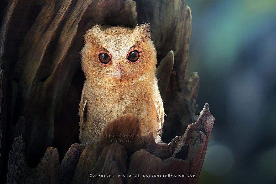 best owl photography captures 8 Best Owl Photography Captures  Ever