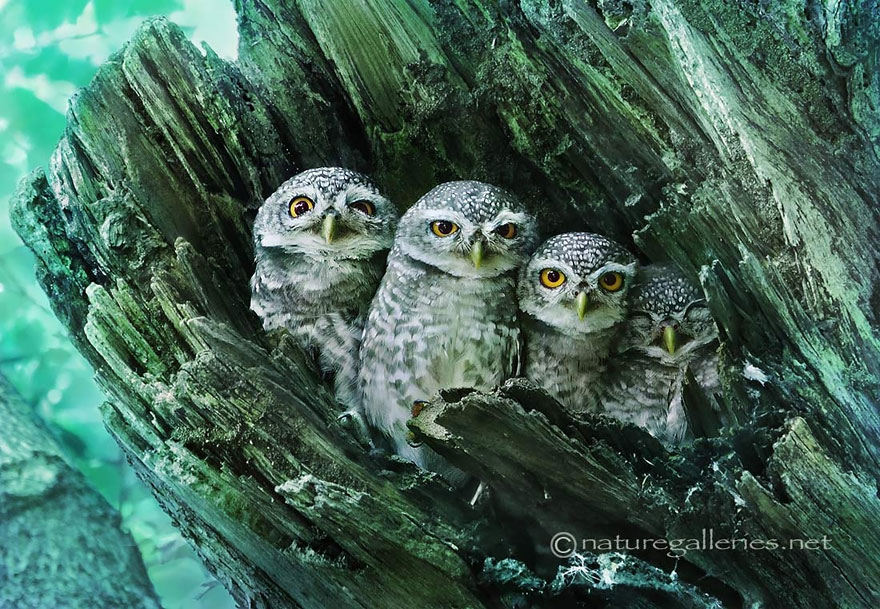 best owl photography captures 9 Best Owl Photography Captures  Ever