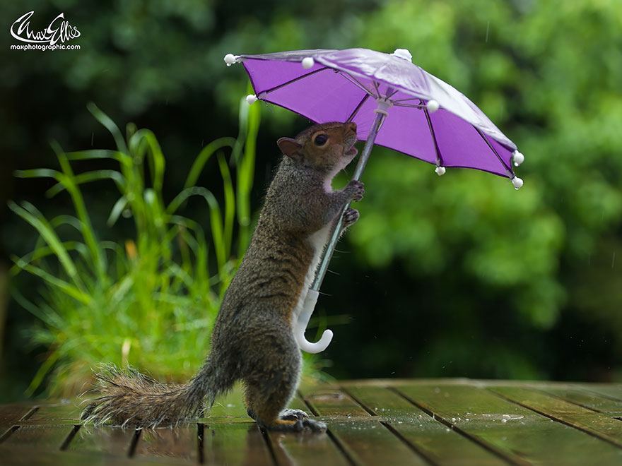 funny squirrel photography poses 1