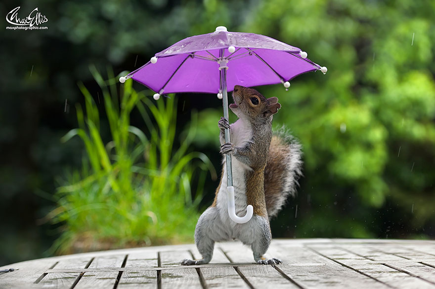 funny squirrel photography poses 2
