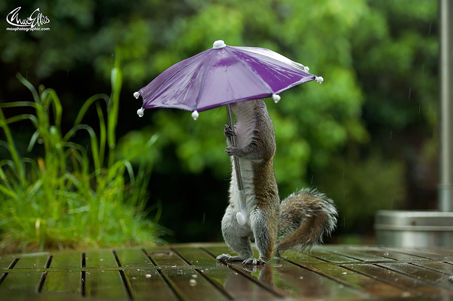 funny squirrel photography poses 3