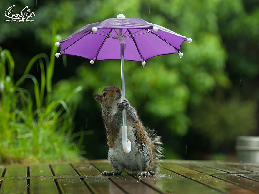 funny squirrel photography poses 4