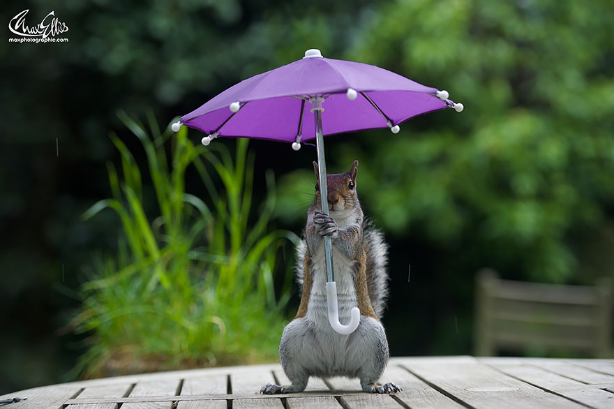 funny squirrel photography poses 5
