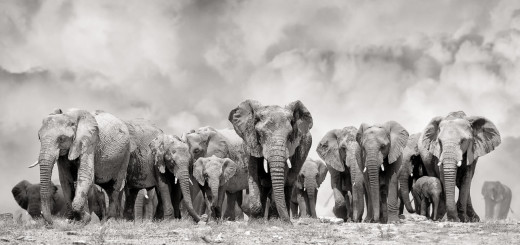Impressive Black and White Animals Photography by Peter Delaney