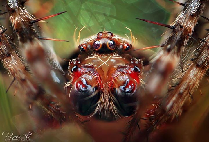 wonderful macro photography of insect eyes