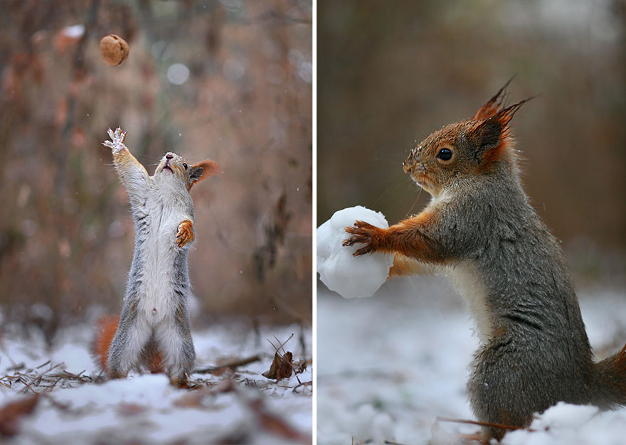 Adorable Squirrel Photography poses - Vadim Trunov 01