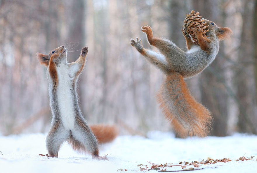 Adorable Squirrel photos Vadim Trunov 01 Adorable Squirrel Poses Photography by Vadim Trunov