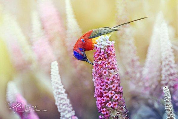 Amazing Bird photo shoot examples 04