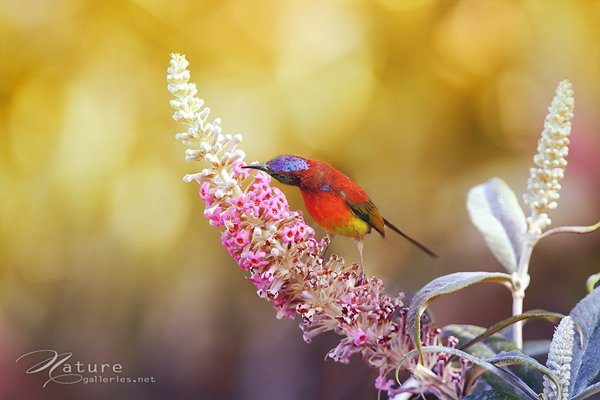 Amazing Bird photography examples Examples The Beauty of Bird Photography
