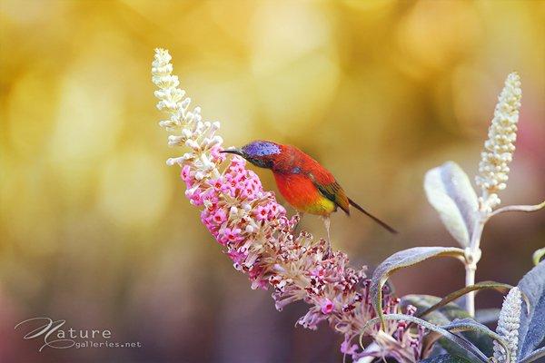 Amazing Bird photography examples